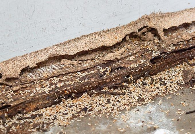 termite damage in a home in north pelham new york