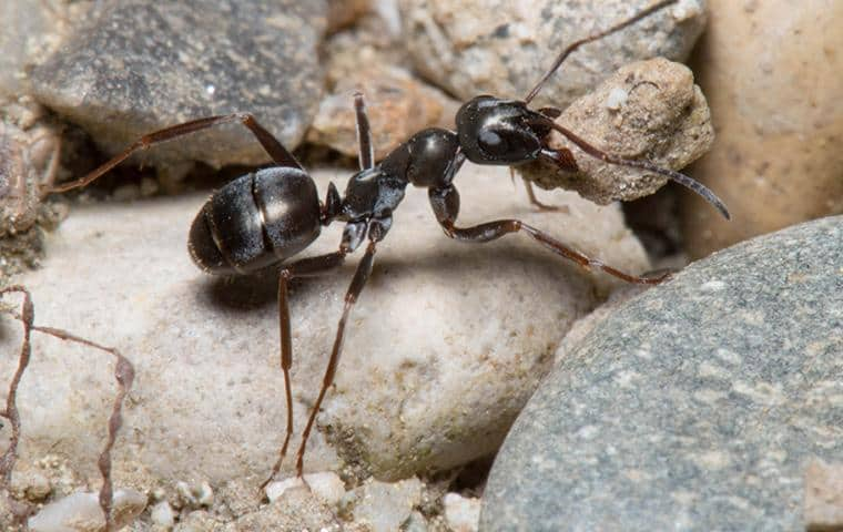 an ant crawling outside of a home in connecticut