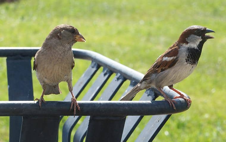 two small birds perched on a trash can in new york