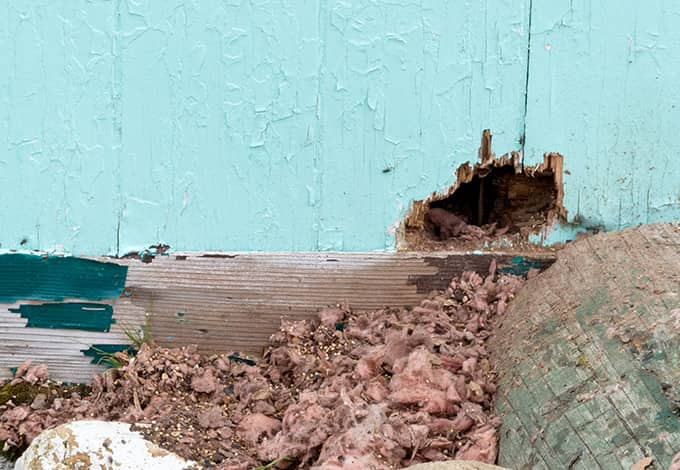hole on outside of ny home created by rodents
