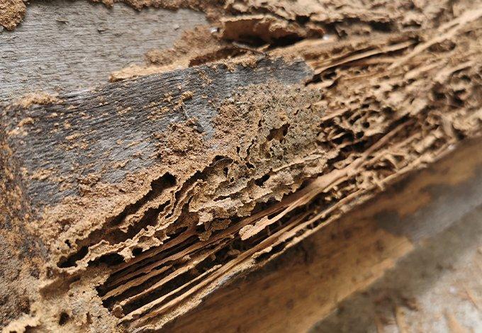 termites damaging wood