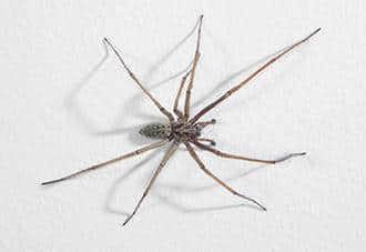 a spider crawling on a wall in a danbury home