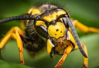 close up of a wasp outside a home in white plains