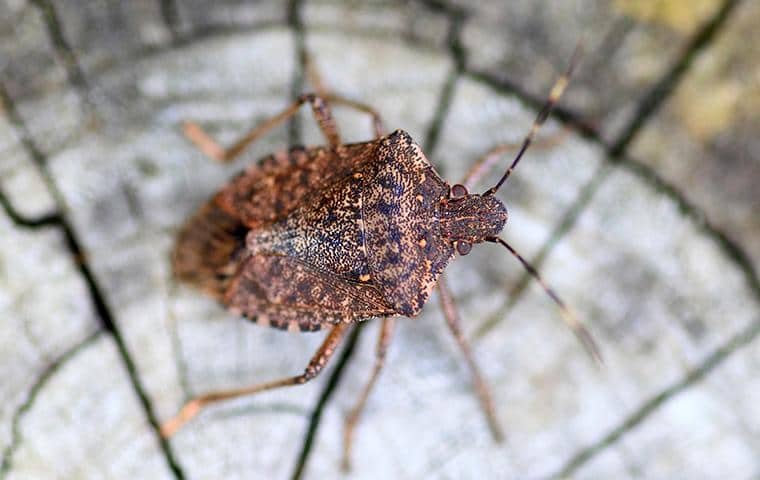 a stink bug on a property in new york