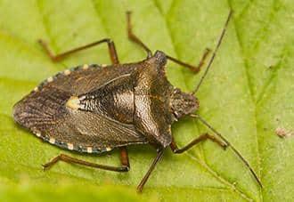 a stink bug on a plant outside of a long island home