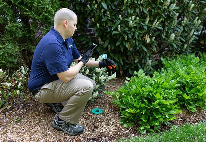 long island exterminator checking termite bait station