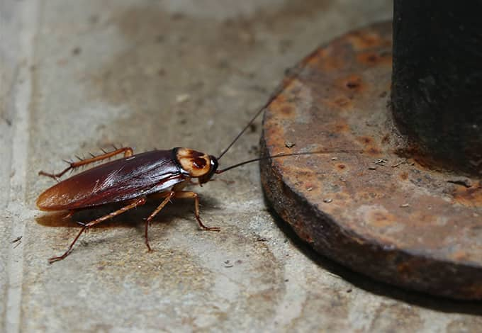 cockroach crawling on dirty basement floor in ny home