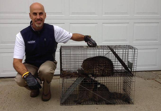 peter scala with wildlife humanely trapped in plandome ny