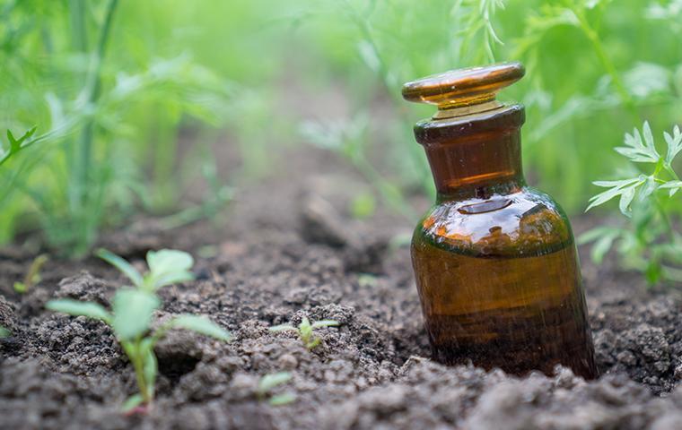 a bottle of oil in dirt