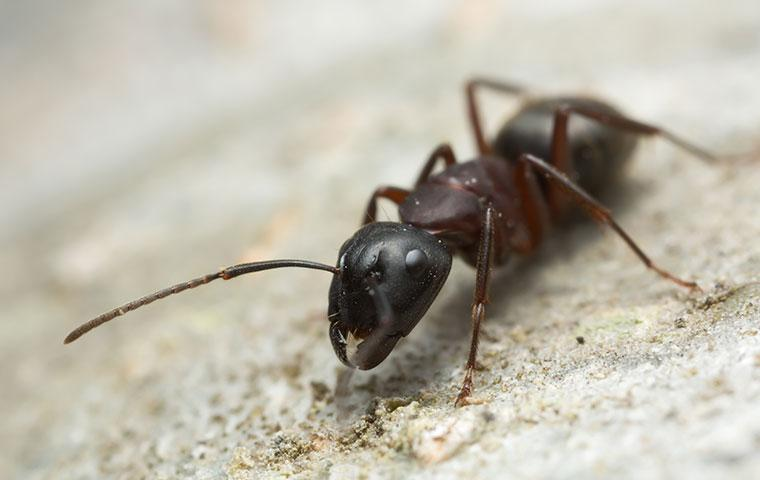 an ant outside a home