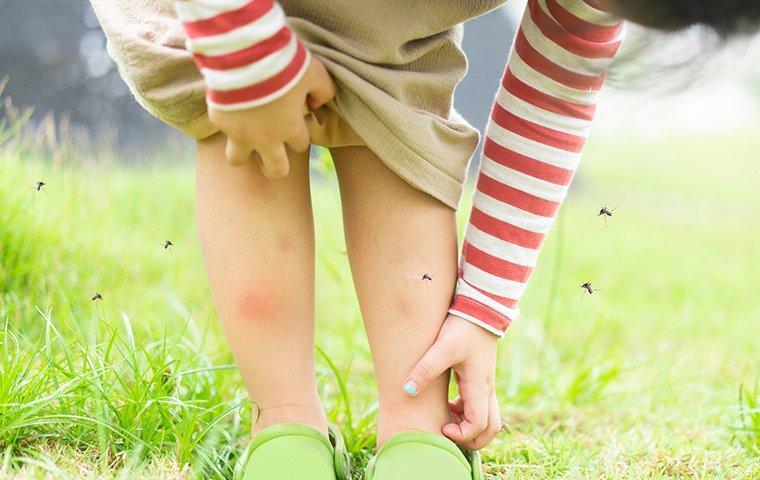 a  mosquitie infestaion durring summer