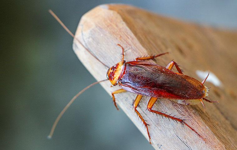 a cockroach on a deck chair
