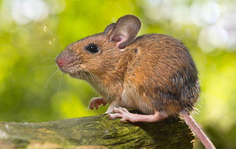 a mouse outside of a home