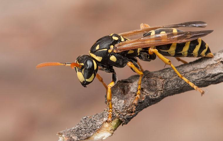 a wasp outside of a home