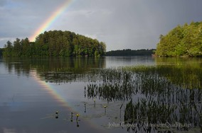 rainbow wilson base