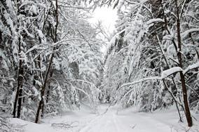 snow trail jay