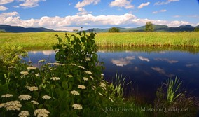 'Untitled' Landscape, Summer, Flowers, New England, Photography, Mountains, clouds, lakes, Museum Quality