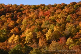 mountainside fall color'Untitled' Landscape, Fall, Folliage, New England, Photography, Sunsets, mountains, clouds, Museum Quality