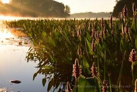 purple flowers wilson sunrise