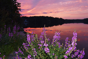 'Untitled' Landscape, Summer, Floral, New England, Photography, Sunsets, mountains, clouds, lakes, Museum Quality