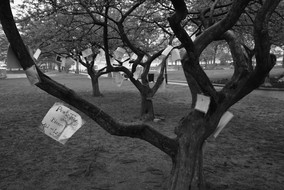 'Untitled' #MuseumQuality B&W Photography, Landscape, Trees, Museum Quality