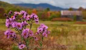 'Untitled' Landscape, Fall, Folliage, Floral, New England, Photography, Sunsets, mountains, clouds, Museum Quality