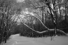 winter B&W