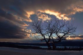 sunset cobble hill apple tree