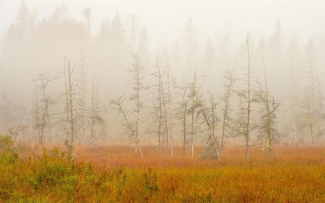 Big Heath Morning, #211