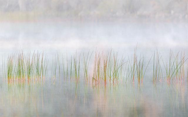 Seal Cove Pond, #213