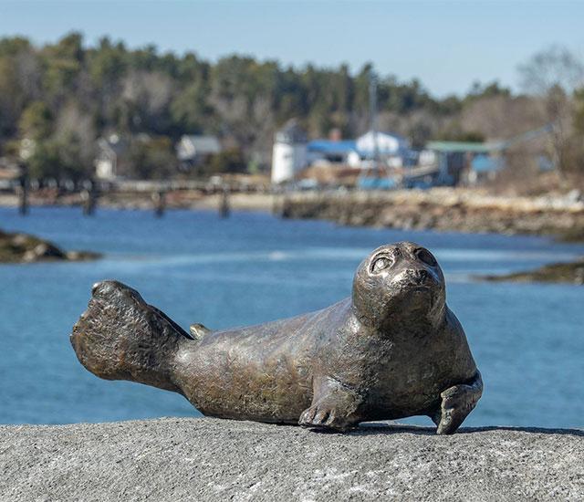 Salty Seal Pup
