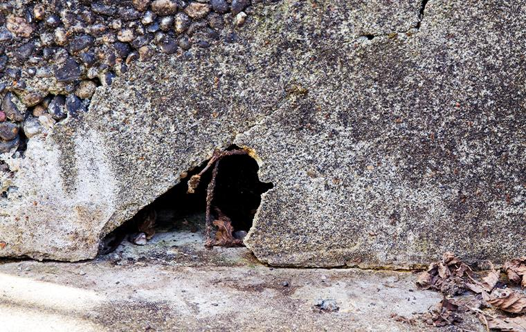 rodent hole in the wall