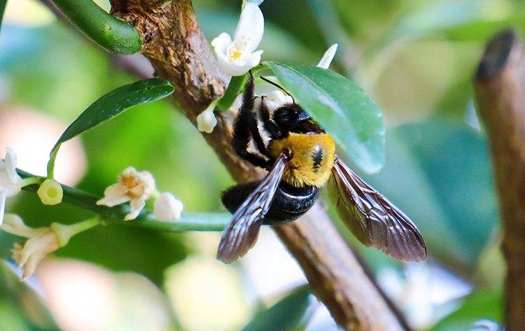 bee climbing on branch