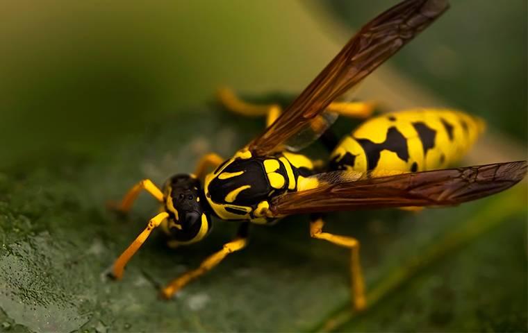 a wasp on a leaf in las vegas yard