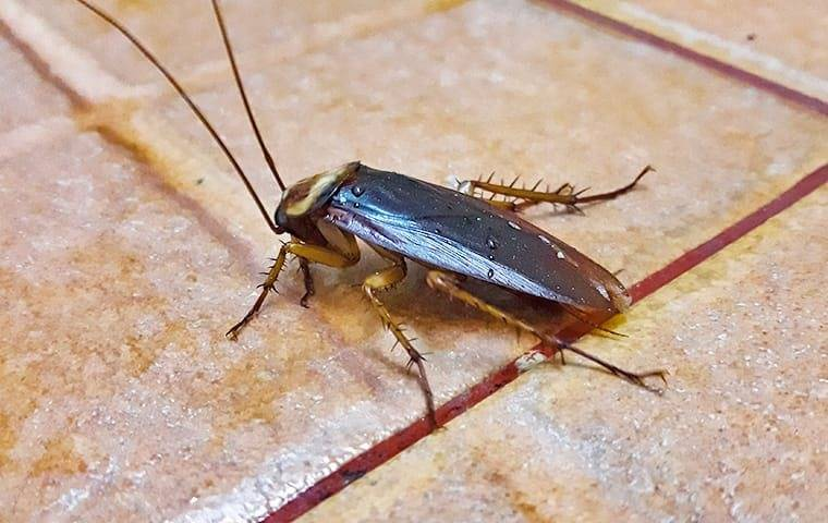 cockroach on kitchen tile