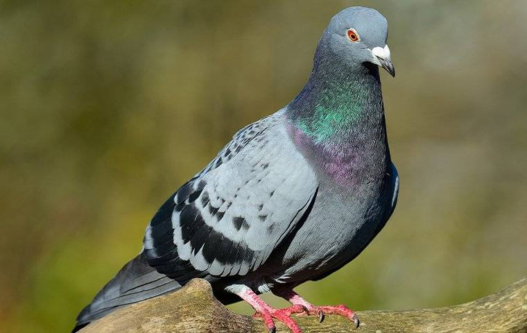 a pigeon perched in a tree