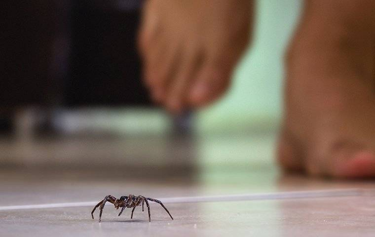 a spider crawling on a kitchen floor