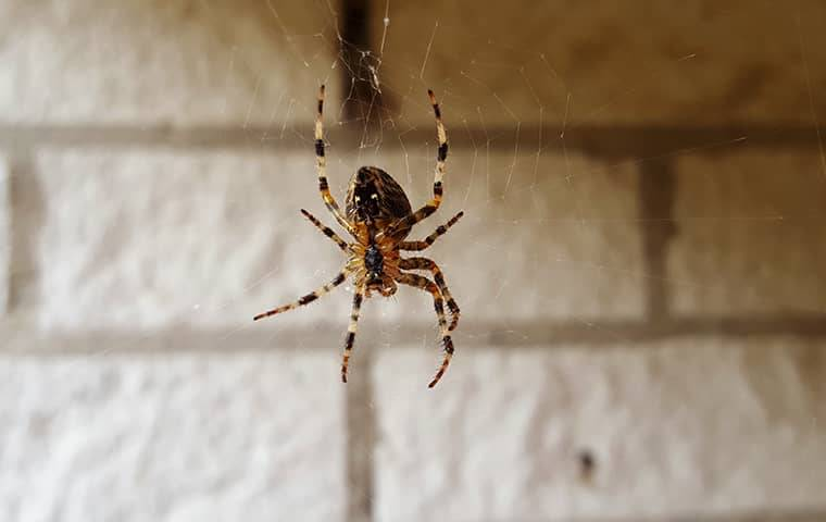a spider in its web in a basement