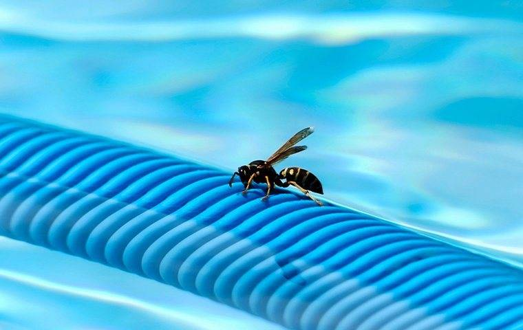 stinging insect crawling on side of pool