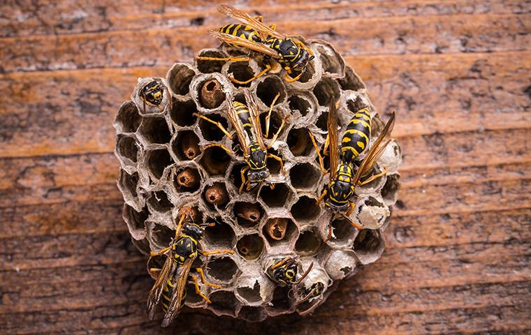 several wasps on a nest
