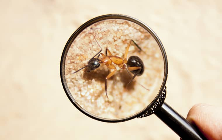 magnifying glass held over and zooming in on a ant