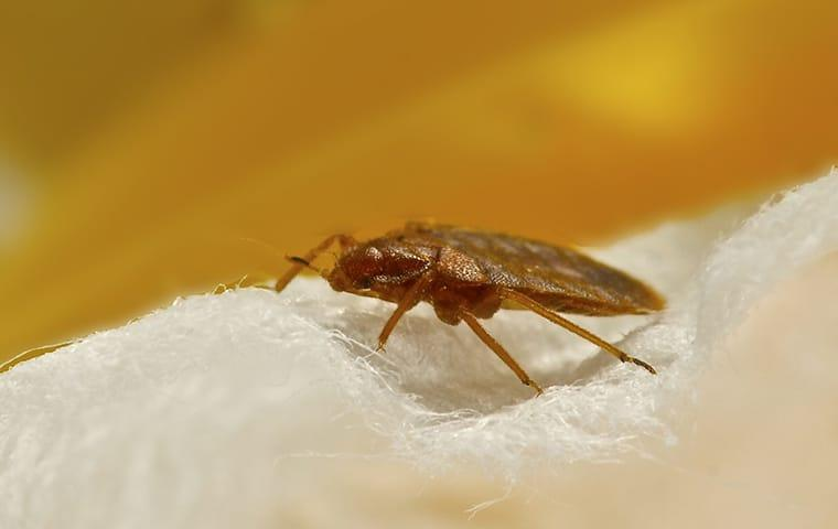 why you need professionals to remove bed bugs