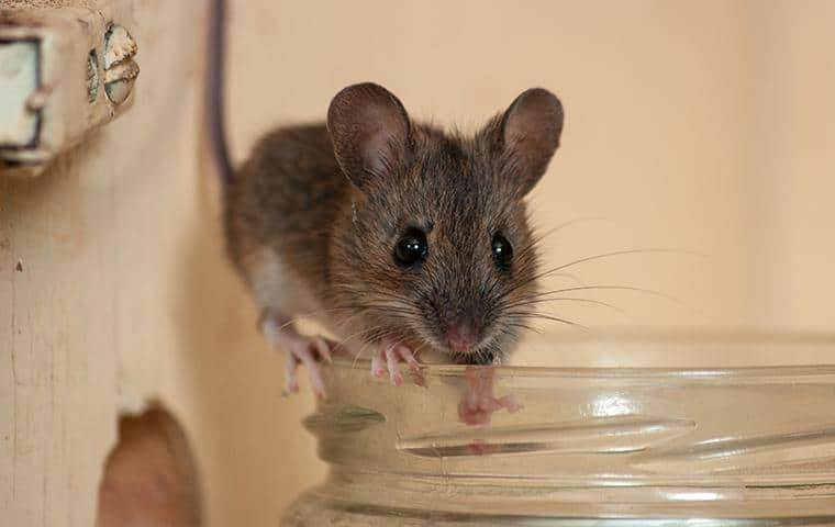 mouse standing on edge of glass cup
