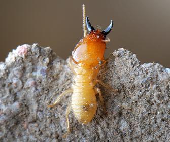 a termite in fayetteville georgia