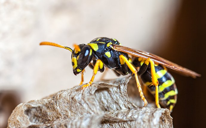 a wasp on a nest in fayetteville georgia