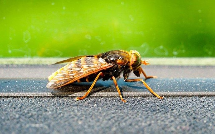 a hornet on a windowsill in fayetteville georgia