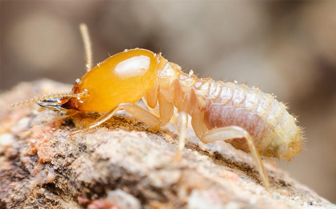 a termite on a mound in fayetteville georgia