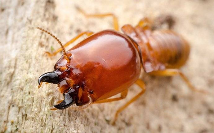 a termite crawling over wood