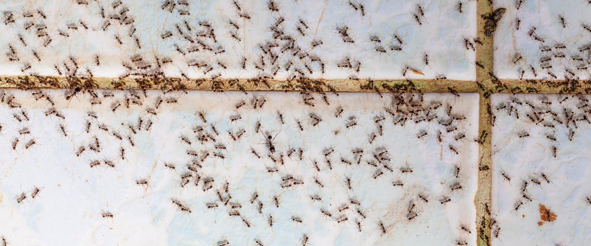 ants on a tiled kitchen floor