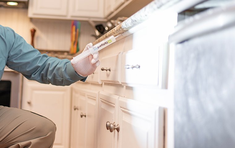 a pest expert applying bait in kitchen